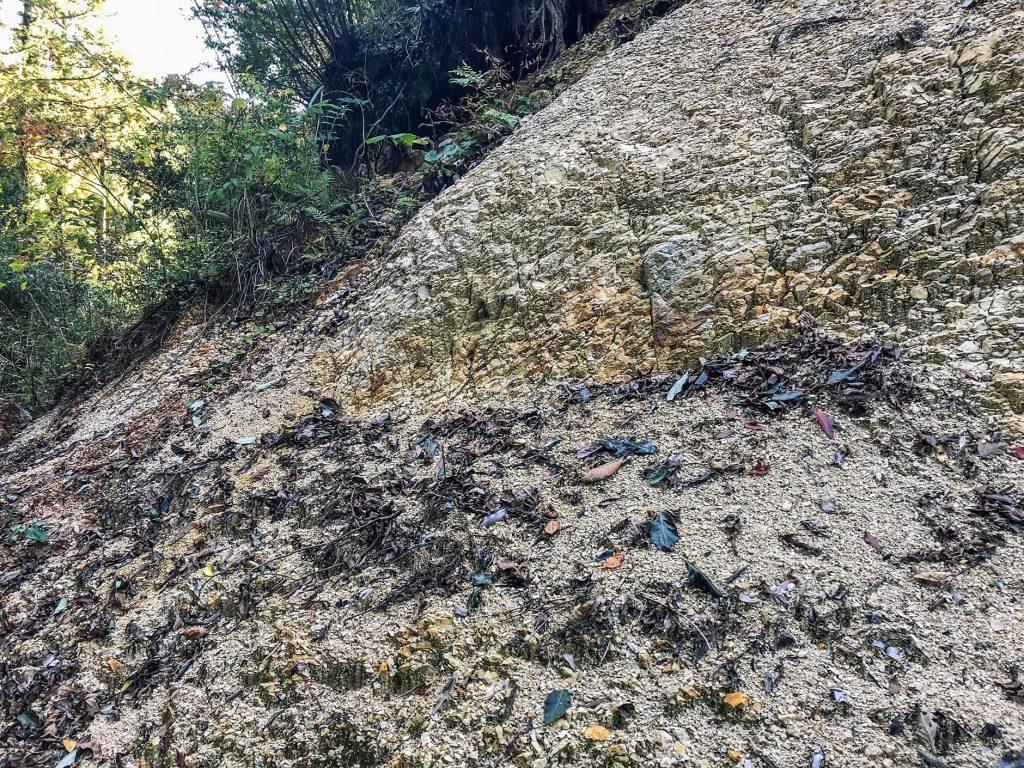 大分県日田市の被害斜面に現れた土肌(通気性、浸透性は悪く見える)