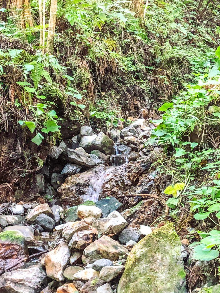 日田市中津江山中の湧水